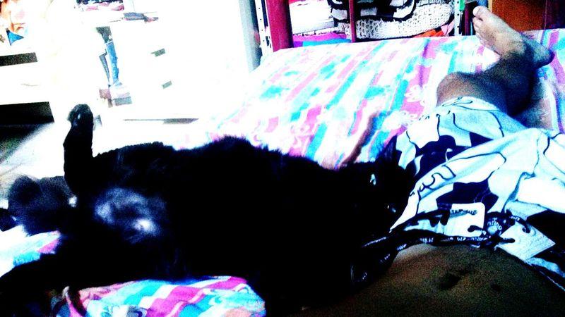Lovemycat Cute♡ My Pets♥