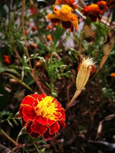 Autumn Flower Plant Flower Head Beauty In Nature