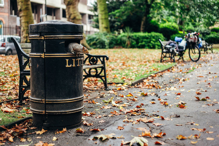 Squirrel looking from dustbin at park