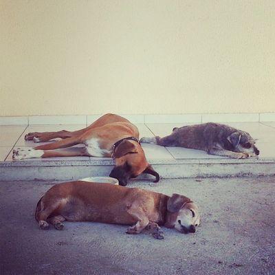 Competição de quem dorme mais! Meus amores! Fam íliafeliz