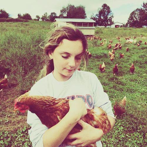Golden Buff Chickens Francesca Farm