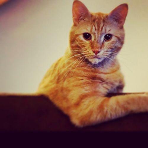 Bobbyinstacat Cat Bobbyforpresident