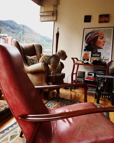 Otto Dog Dogs Dogslife Bogotacity Bogotá Friends City Life La Tierrita Happiness Relaxing Having Fun Enjoying Life Hello World Cityscape EyeEm Animal Lover