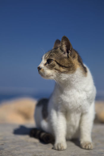 Animal Themes Beach Beach Cat Cat On The Beach Domestic Animals Domestic Cat Egyptian Cat Mammal Nature No People One Animal Outdoors Pets Sand Street Cat Street Cat In Alexandria,Egypt Street Cat Of Alexandria,egypt Streetcat