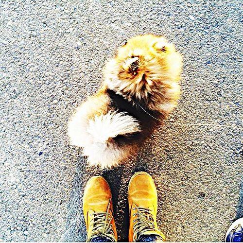 Няшная собачка по имени Федя😇😇😇 First Eyeem Photo