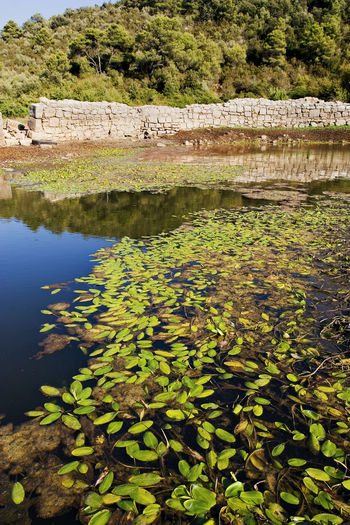 Plants growing by lake