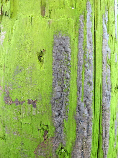 Macro Beauty Macro Textures And Surfaces Texture Green Outdoors Wood Mould Moulded Mouldy Telegraph Pole Pole Post Textured  Composition Jagged Cracks Decay Beautiful Nature Weathered Weatheredwood Bright Colours Contrast Pattern Pieces