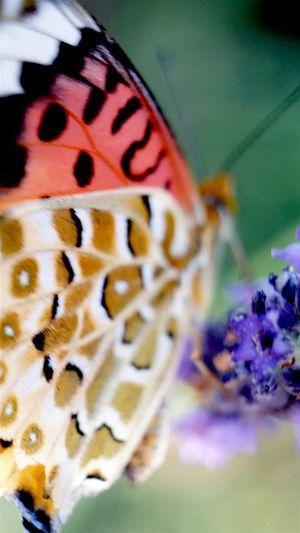 今日も楽しい写真いぢり 失敗写真をなんとか... Japan Flowers Butterfly 恥を承知で サムネなら...