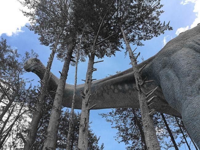 Dinosaur Live Cretasic Park Diplodocus Long Neck  Check This Out