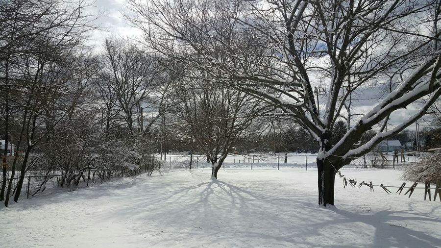 Tree Snow Winter Cold Temperature Nature Beauty In Nature Outdoors Tranquility Day No People Landscape Shadow Clothesline Backyard Photography Branch Cloud - Sky Snow Covered EyeEm Best Shots - Nature