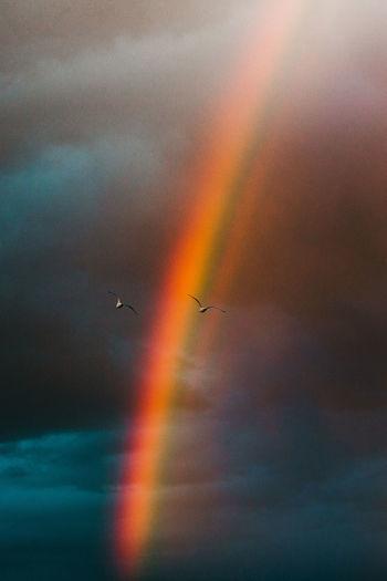 Birds flying against rainbow in sky