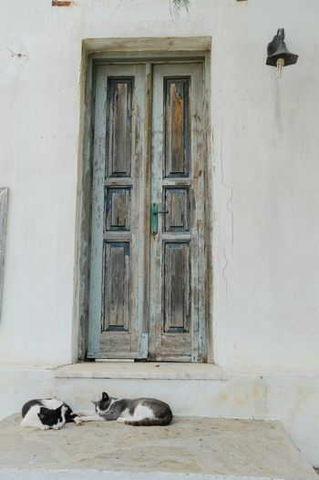 Two Cats Resting In Front Of Closed Doors