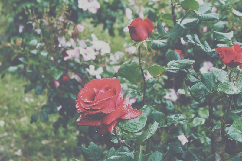 Flower Macro_flower Flower Porn