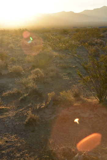 sun behind hills illuminates and flares over the Mojave Desert landscape Mojave Desert Beauty In Nature Day Desert Heat Desert Landscape Environment High Angle View Illuminated Land Landscape Lens Flare Nature Nevada No People Outdoors Pahrump Plant Scenics - Nature Sky Sun Sunlight Sunset Tranquil Scene Tranquility