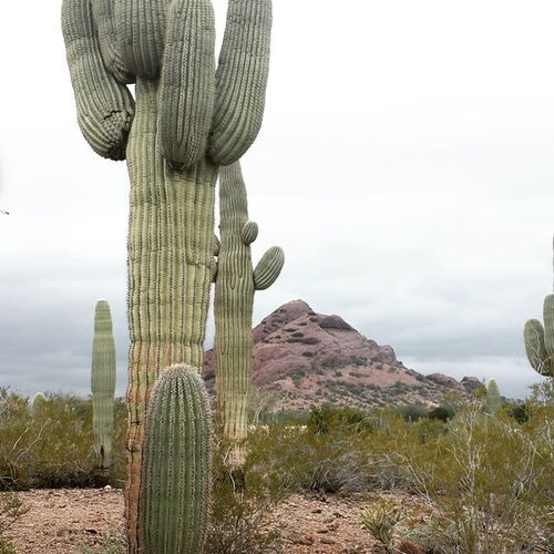 Would've never guessed I'd be spending NYE in the middle of a desert at the beginning of the year but it's just been that type of year. Expect the unexpected NYE 2015  Cactus Phoenix