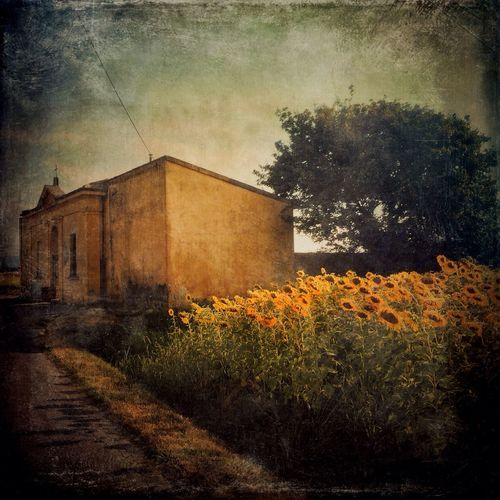 AMPt_community IPhoneography NEM Submissions The Great Outdoors - 2015 EyeEm Awards