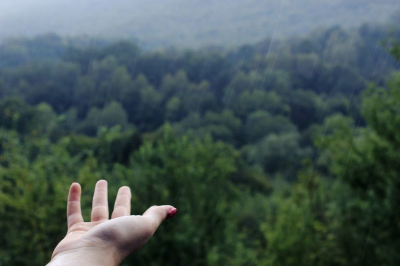 Human Hand Hand Human Body Part One Person Body Part Tree Plant Personal Perspective Real People Nature Human Finger Finger Green Color Lifestyles Growth Day Unrecognizable Person Beauty In Nature Leisure Activity