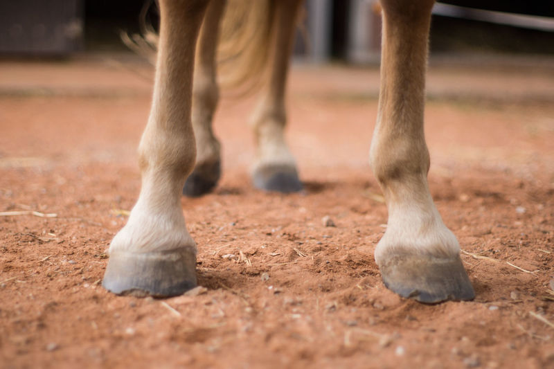 Low section of horse standing on dirt road