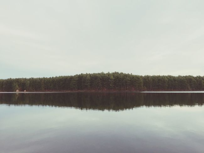 EyeEm Nature Lover Nature_collection Nature Photography Landscape Learn & Shoot: Simplicity Beautiful Nature Naturelovers Water_collection Water Reflections Trees Gates Pond Hudson MA Landscapes With WhiteWall