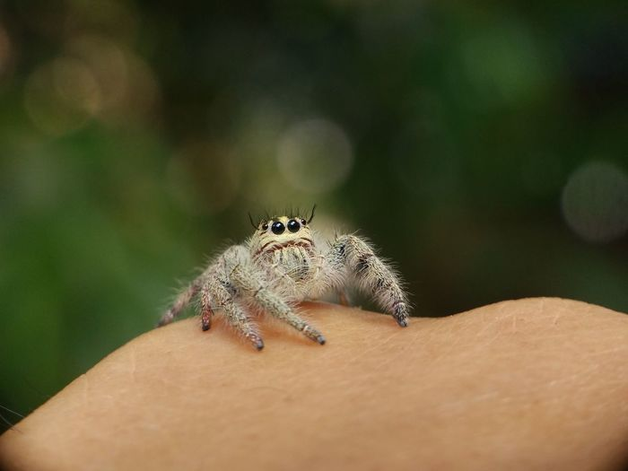 Close-up of spider on human skin