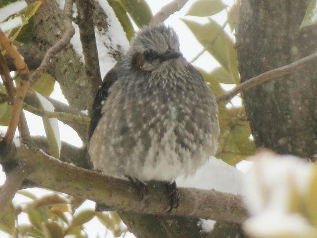 小鳥 ムクドリ 小鳥 Animals In The Wild Animal Wildlife Animal Themes Animal Bird Vertebrate Tree