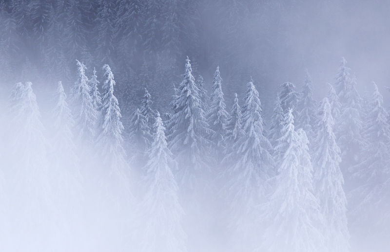 Beautiful morning in Rodnei Mountains, Romania Abstract Backgrounds Beauty In Nature Close-up Cold Cold Temperature Day Fog Fragility Full Frame Mist Mountain Nature No People Outdoors Snow Tranquility Winter