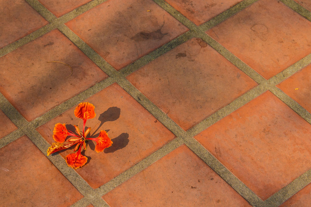 Meditation Beauty In Nature Beauty In Nature Beauty In Ordinary Things Close-up Day Fallen Flower Fragility Growth Nature No People Outdoors Pattern Solitude Tile Tiled Floor