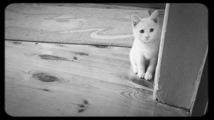 Piwiyim))) First Eyeem Photo