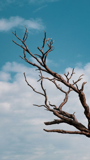 branch out Sky