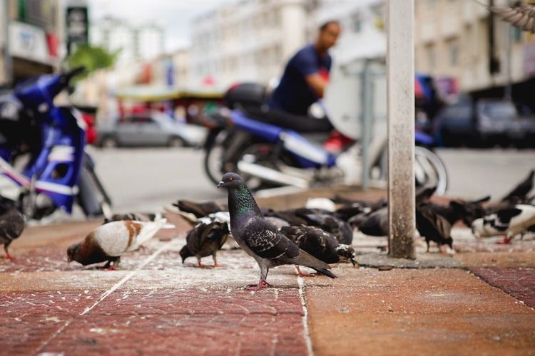 Bird Animal Themes Animals In The Wild Focus On Foreground Animal Wildlife Day Large Group Of Animals Outdoors Real People Perching Architecture One Person Close-up City Perak Ipoh,Malaysia Ipohtown Pasar Malaysia Truly Asia Malaysia