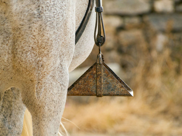 Animal Animal Themes Animal Wildlife Animals In The Wild Cattle Close-up Day Farm Farm Life Farming Focus On Foreground Hanging Horse Horse Life Horse Riding Horses Livestock Mammal Nature No People One Animal Outdoors Stirrup Stirrups