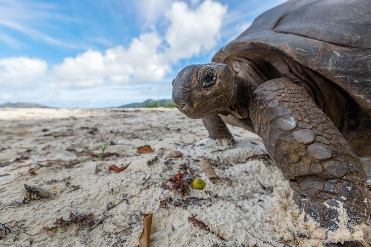 Close-up of turtle on beach against sky