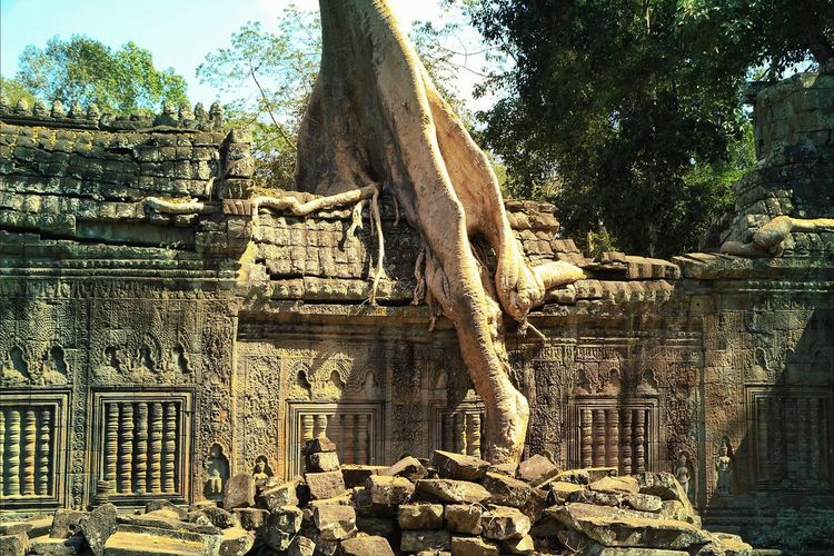 I love the way nature is slowly reclaiming the temples build in its midst! Eye4photography  Travel Photography Jungle Trees TreePorn History Architecture EyeEm Gallery Nature Photography EyeEm Nature Lover The Adventure Handbook Light And Shadow