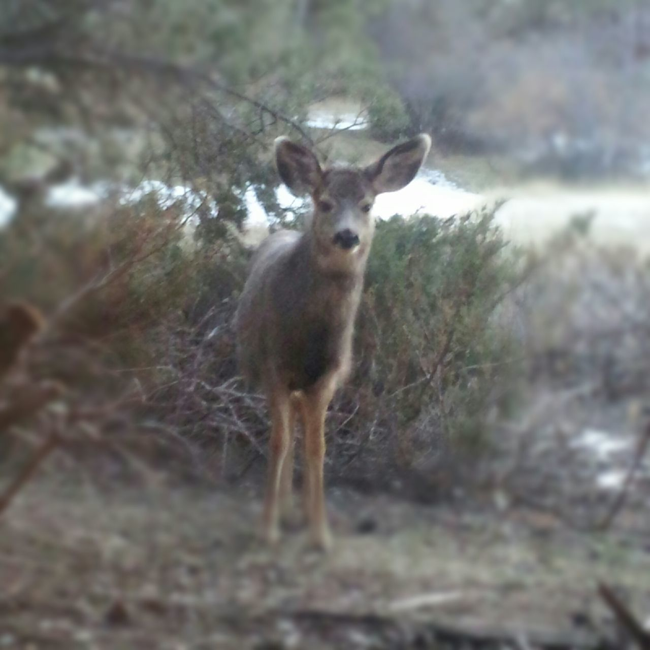 deer, animal themes, mammal, one animal, looking at camera, animals in the wild, portrait, animal wildlife, nature, no people, standing, day, outdoors