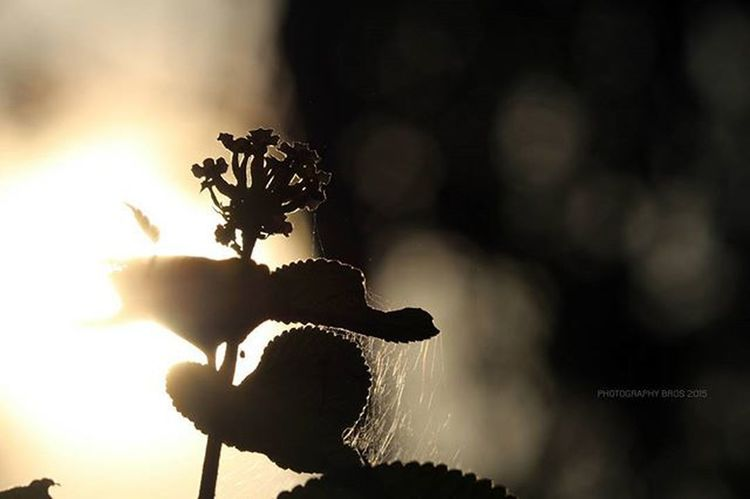 EditLESS 😍💓 Nofilter Backlash Naturalflare Naturephotography Natureaddict Naturography Nature_seekers Naturelovers Canonphotography Canonphotos 700D NoEdits  Natureporn Photography_love Photographyislife Instadaily Photographybros