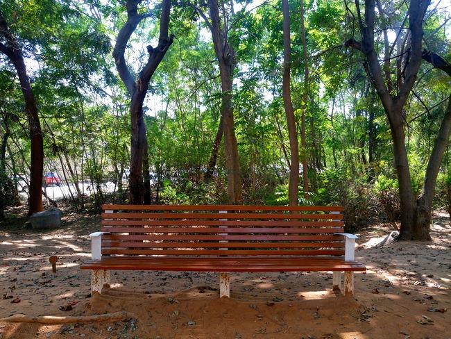 A wooden bench to relax who do walk for wellbeing Tree Wood - Material Tree Trunk Outdoors Day Nature No People Growth Branch Beauty In Nature Sky Xperian Photography Sony Xperia Sony Xperia M5 Greeneryeverywhere Wooden Bench Wooden Bench Beside A Walk Way