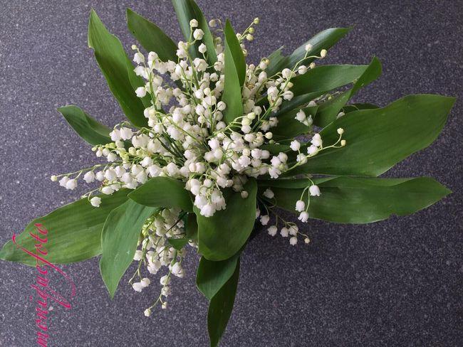 Schönen, guten Morgen. Einen lieben Blumengruß von mir. 💕💗 Monique52 Blumenstrauß Maiglöckchen  Waldblumen Wildblumen Blütenduft Waldspaziergang Hochrhein Schwarzwald