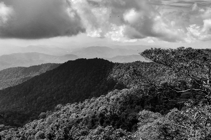 Beautiful nature landscape in black and white Mountains Mountain Range Scenic Landscapes Black And White Forest Rainforest Floras Rural Landscape Cloud - Sky Flying Sky Animals In The Wild No People Nature Outdoors Day Beauty In Nature