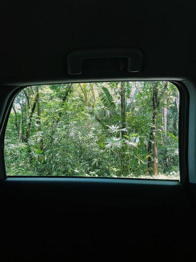 Plants seen through car window