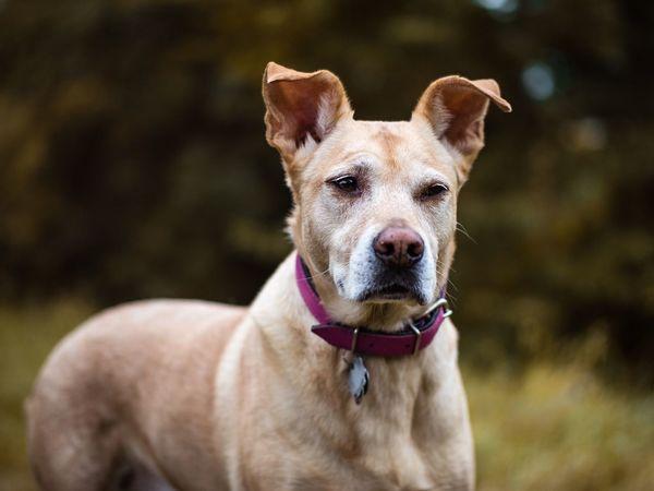 Dogs Of EyeEm Dogs Dog❤ Doglover Hunde Hunde Liebe ♡ Dogoftheday Dog Portrait Animals Animal Photography Pet Portraits