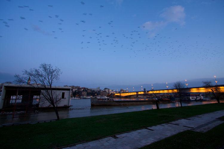 Birds in city against sky at dusk
