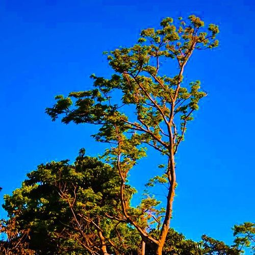 Summer is here... Colorful Colors Nature Photography Mood Photolife Pilipinas Philippines Bluesky Trees Green Gogreen Hooe