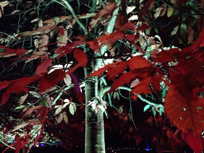 From a lighting happening at a parkland in Helsingborg. No filter and taken with my iphone. Nature Garden Taking Photos Autumn Leaves