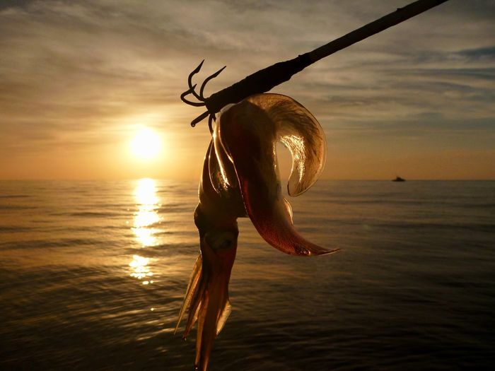 Calamar Getty Images Squid Fishing Squid Calamari Calamar Pesca Fisch Poissons Pêcheurs Ocean Fisherman Fishing Net Fishing Boat Fish Blue-fishing Creative Sunset Water Sky Sea Horizon Beauty In Nature Nature Scenics - Nature Orange Color Silhouette Fishing