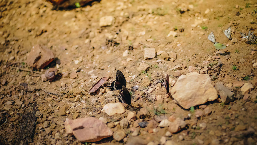Animal Animal Themes Animals In The Wild Butterfly Close-up Land Nature No People Outdoors Rock Selective Focus