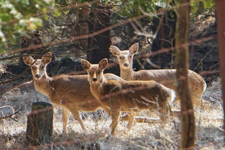 EyeEm Best Shots Nature_collection EyeEm Nature Lover Nature Deer