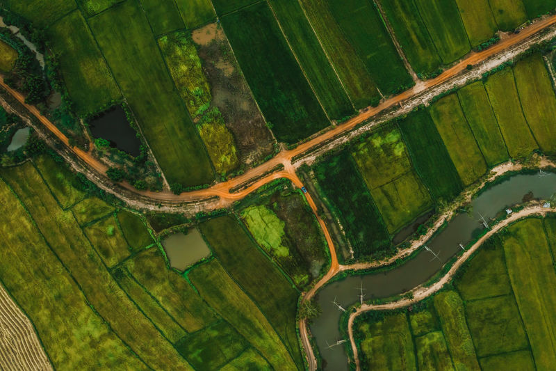 aerial view of road and devious river in a fields Aerial View Green Color Nature Environment Day Beauty In Nature Landscape Agriculture Farm Plant Land Water Outdoors Tranquility Scenics - Nature Rural Scene Tranquil Scene Tree Paddy Field Rice Paddy Rice Field River Nature Natural Top View Thailand ASIA Asian  Road Tree Plant Above