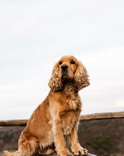 View of a dog looking away against sky