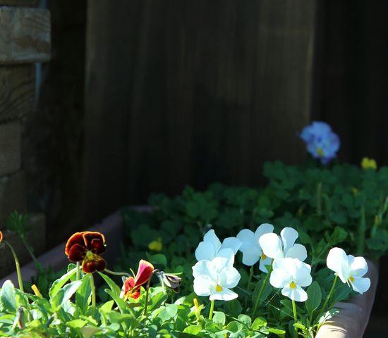Flowers,Plants & Garden Flowers 花 Nature 花と庭 EyeEm Nature Lover
