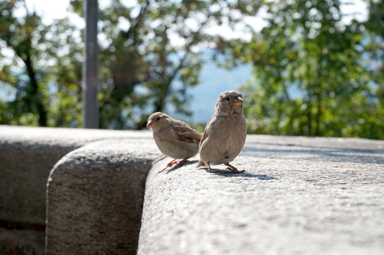 Bern Cityscape Nature Animal Themes Birds Close-up Focus On Foreground Nature Perching Sparrow Swiss